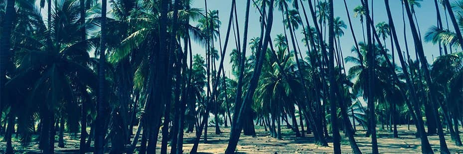 The Scott Treatment Team Page Background Picture with a Coconut Trees